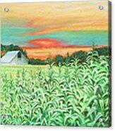 Neola Corn Acrylic Print