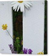 Peeking Garden Daisy Acrylic Print