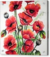 Poppies In Pastel Acrylic Print