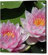 Pretty Pink Water Lilies Acrylic Print