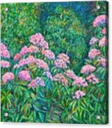 Rhododendron Near Black Rock Hill Acrylic Print