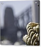 Ropes with Harbour backdrop Acrylic Print