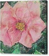Rosy Inspirations Acrylic Print