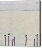 Seagull Sentry Acrylic Print