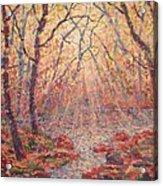 Sun Rays Through The Trees. Acrylic Print