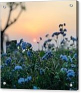 Sunset Behind Flowers Acrylic Print