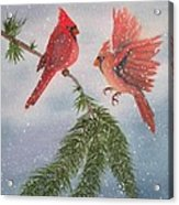 Sweet Pair Of Cardinals Acrylic Print