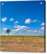 The loneliness of the tree in the middle of the soy plantation in the rural area of Piracicaba. Acrylic Print
