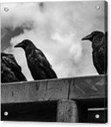 Three Crows 2 Acrylic Print