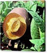 Tobacco Picker Acrylic Print