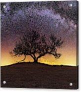 Tree of Wisdom Acrylic Print