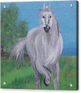 White Stalion Acrylic Print