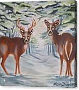 Whitetail Deer In Winter Acrylic Print