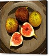 Common Fig Ficus Carica Canvas Print by Venetia Featherstone-Witty