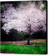 Ghostly Spring Canvas Print by Bobbi Feasel