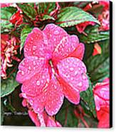 Impatiens Canvas Print by Debbie Sikes