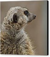 Meerkat Canvas Print by Ernie Echols