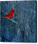 Northern Cardinal Canvas Print by Thomas Young