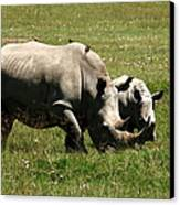 White Rhino Mother And Calf Canvas Print by Aidan Moran
