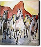 Wild Mustangs Canvas Print by Sidney Holmes
