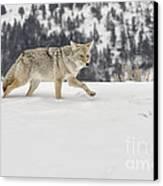 Winter's Determination Canvas Print by Sandra Bronstein