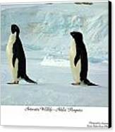 Adelie Penguins Canvas Print by David Barringhaus