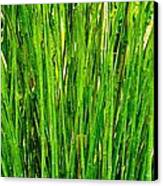 Bamboo Canvas Print by Andres LaBrada