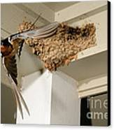 Barn Swallow Canvas Print by Scott Linstead