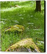 Beautiful Lush Vobrant Image Of Ancient Woodland Canvas Print by Matthew Gibson
