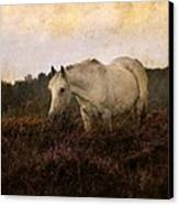 Bed Of Heather Canvas Print