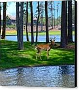 Big Canoe Buck Canvas Print by Bob Jackson