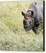 Black Rhinoceros Diceros Bicornis Michaeli In Captivity Canvas Print