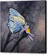 Butterfly Canvas Print by Bob Hallmark