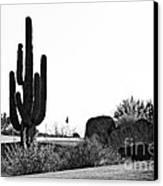 Cactus Golf Canvas Print