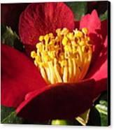 Camellia Flower Canvas Print by Joyce Woodhouse