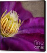 Clematis Canvas Print by Elena Nosyreva