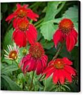 Coneflowers Echinacea Red  Canvas Print