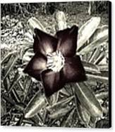 Dark Canvas Print by Chasity Johnson