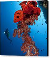 Diver Looks On At A Bright Red Soft Canvas Print by Steve Jones