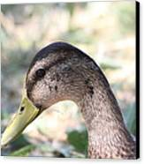 Duck - Animal - 011314 Canvas Print by DC Photographer