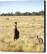 Emu Chicks Canvas Print by Tim Hester