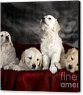 Festive Puppies Canvas Print