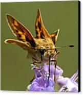 Fiery Skipper Butterfly Canvas Print