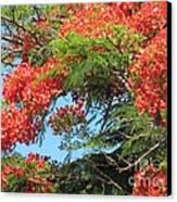 Flamboyants - Ile De La Reunion - Reunion Island Canvas Print by Francoise Leandre