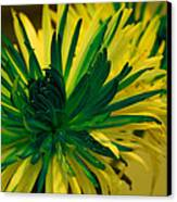 Flower Canvas Print by Jennifer Burley