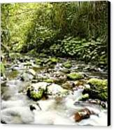 Forest Stream Canvas Print by Les Cunliffe