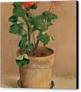 Geraniums In A Pot Canvas Print