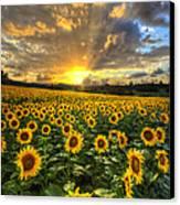 Golden Evening Canvas Print by Debra and Dave Vanderlaan