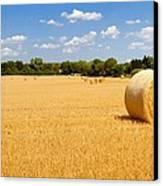 Golden Harvest Canvas Print