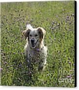 Golden Retriever Dog Canvas Print